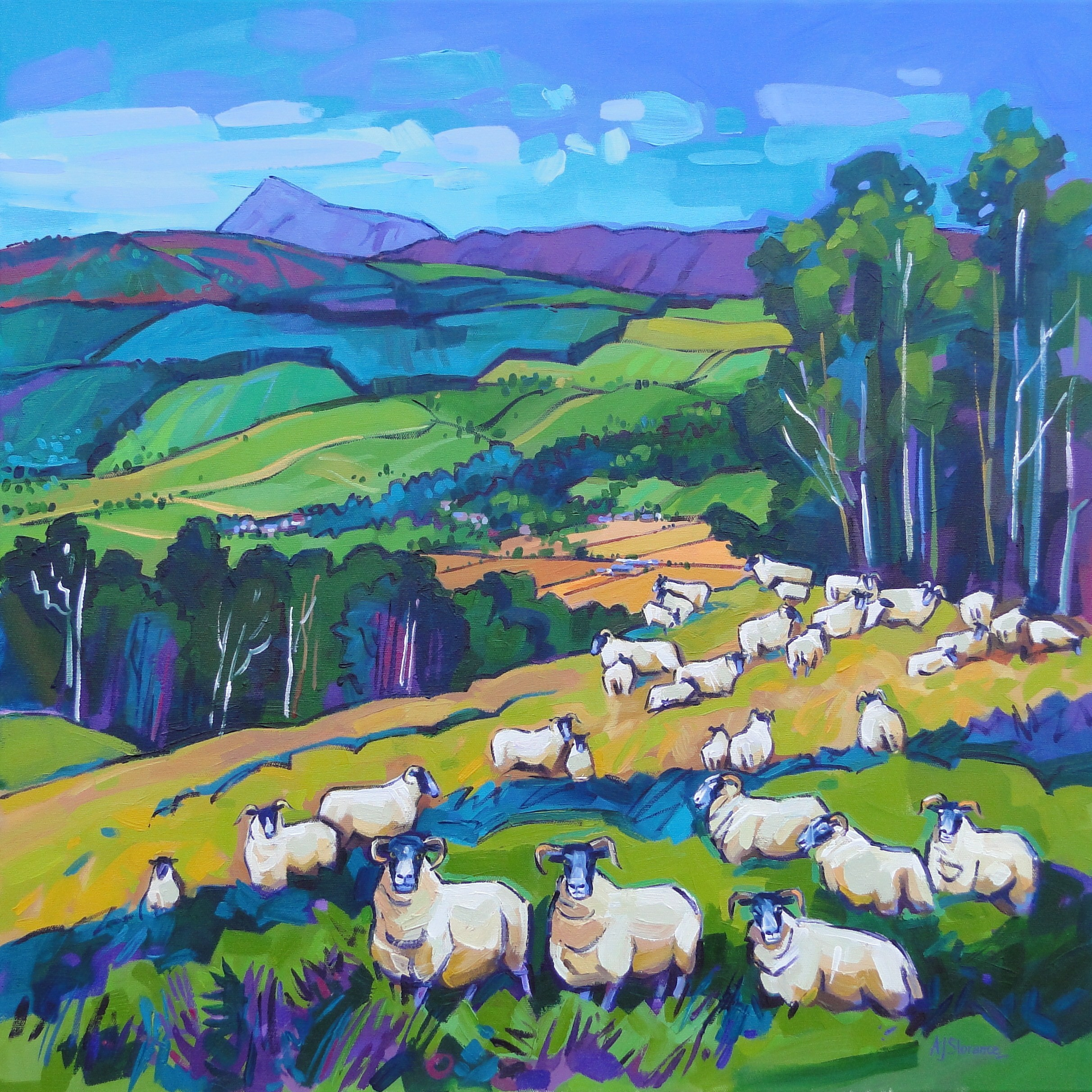 451-Blackface-sheep-and-Schiehallion-Audrey-Slorance